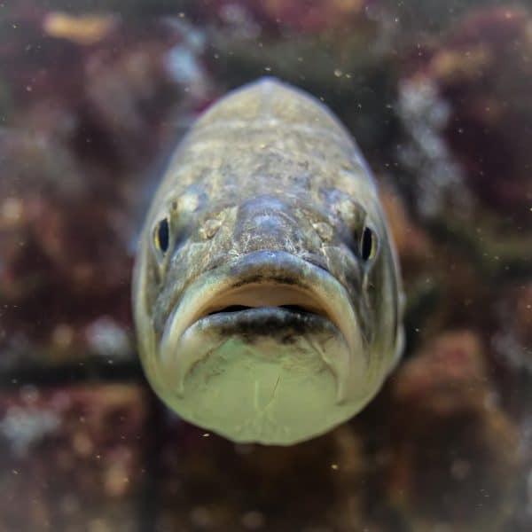 קנט שילמה למגדלי הדגים כ-10 מיליון ₪ בשנה החולפת